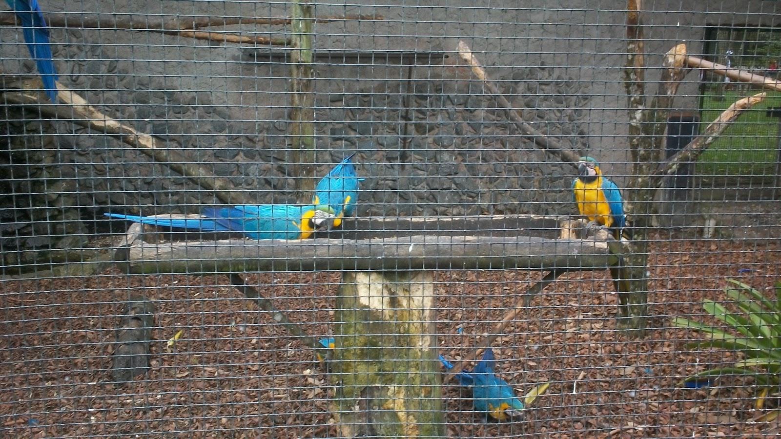 : Brasil São Bernardo do Campo Parque Estoril 18km #334C60 1600x900
