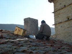 Caja nido lechuza - Hontz txuri habikutxa