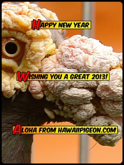 Aloha and happy new year for Waimanalo feed supply