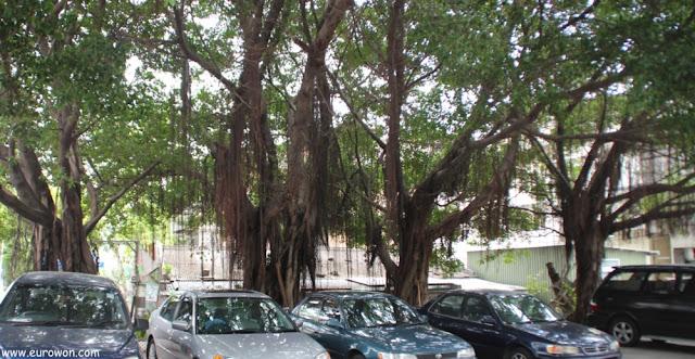 Parking protegido por enormes árboles, enfrente del Templo Hung Shing
