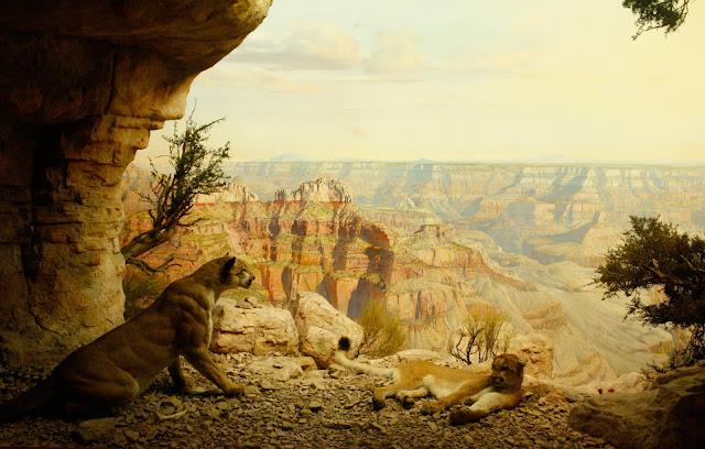 diorama, pumas, museo americano historia natural, foto, Lucas Uberti-bona