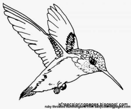 texas state bird coloring page - birds coloring pages free coloring pages