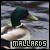 I like mallards