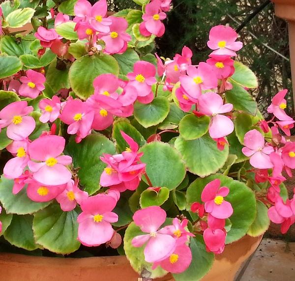 mis nuevas flores - guia de jardin. aprende a cuidar tu jardín.