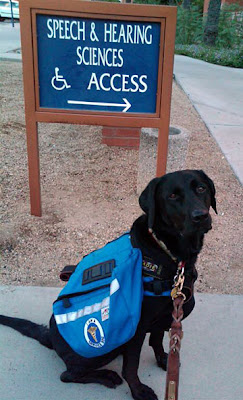 Service dog Sable wearing her Wolf Packs Reflector dog pack and I Am A Service Dog patc