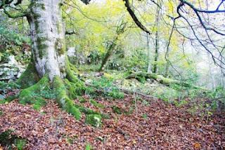 Cangas de Onís, ruta vega de Orandi, zona boscosa en el monte Auseva