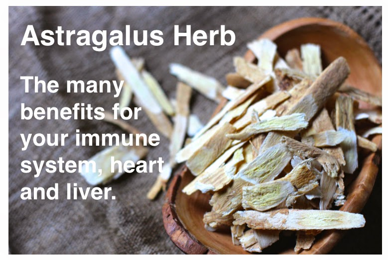 Methow Valley Herbs Astragalus A Supreme Protector