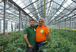 BIO FARMING TOMATO IN GREENHOUSE.