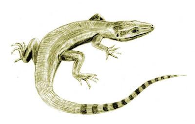 reptiles del carbonifero Archaeothyris