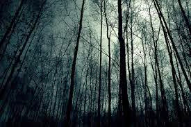 Dark night forest