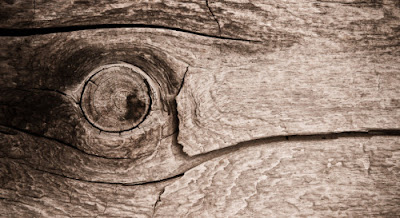 Piece of Wood that Looks like an Eye