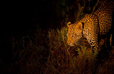 c4 images and safaris, mashatu, photo workshop