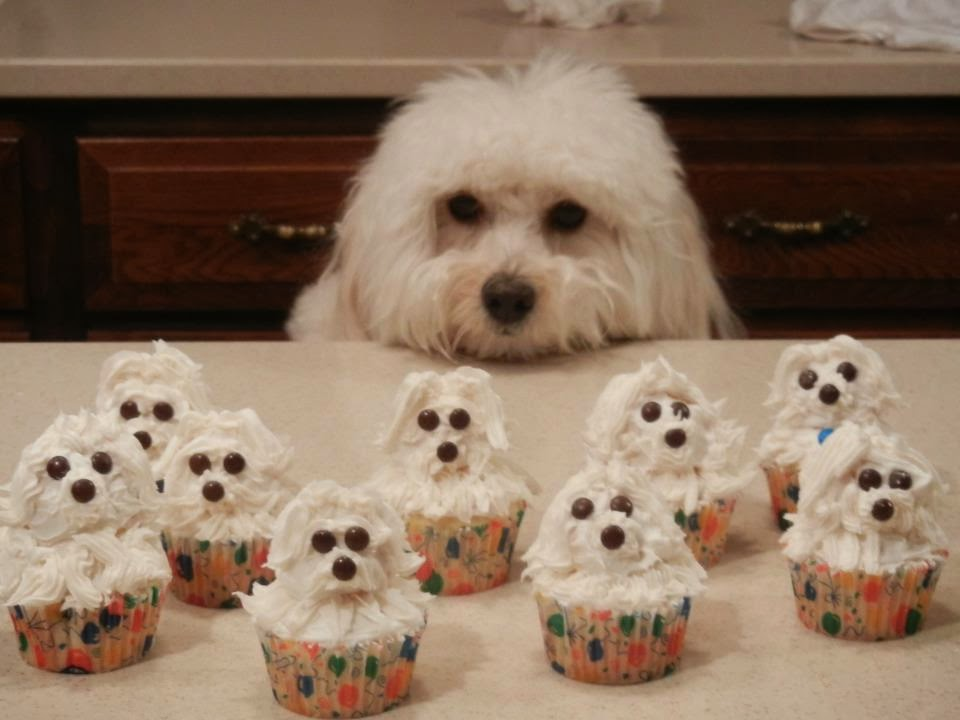 Cute dogs - part 11 (50 pics), dog looking at cupcakes shaped looks like him