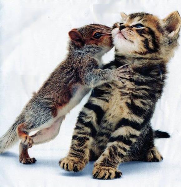 Esquilo beijando um gatinho