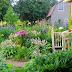 A Tour Around our Mid August Garden