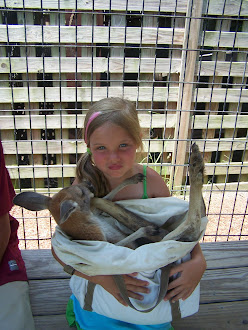 Baby Kangroo in a pouch!