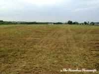 mowed hay field