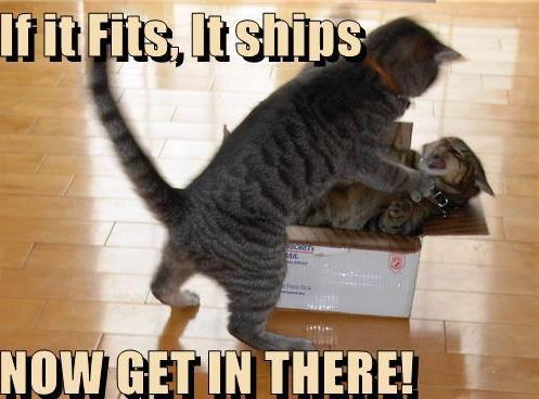 If It Fits, It Ships - Now Get In There - Funny Cats