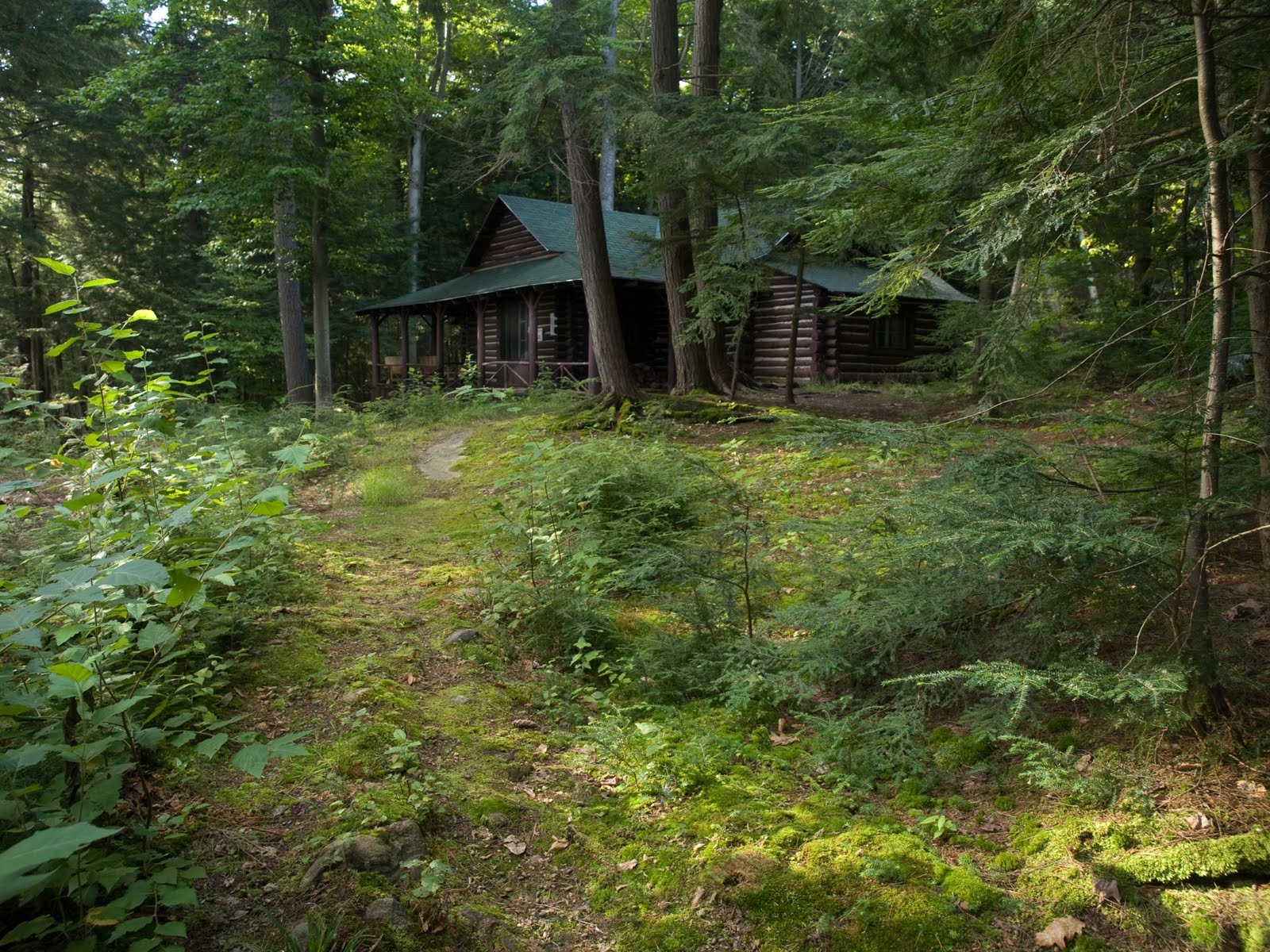 Photographers International Cabin In The Woods Connie