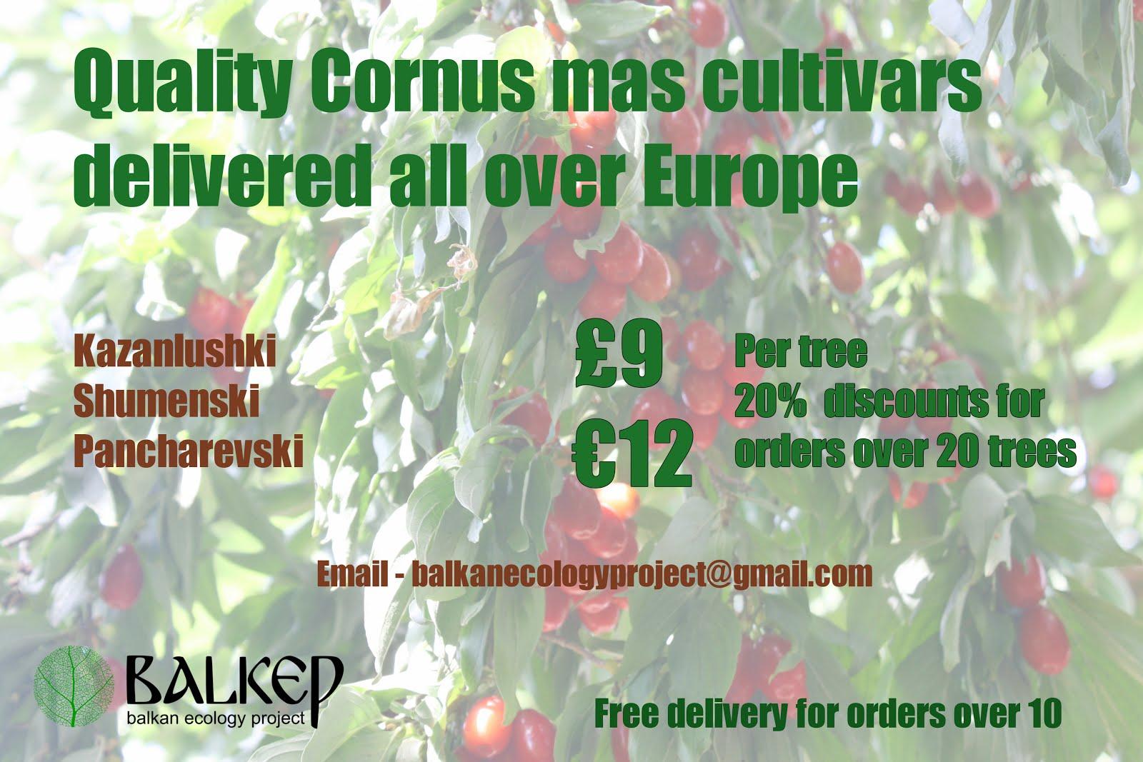 Cornelian Cherry Cultivars