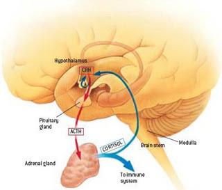 Japanese Encephalitis Virus