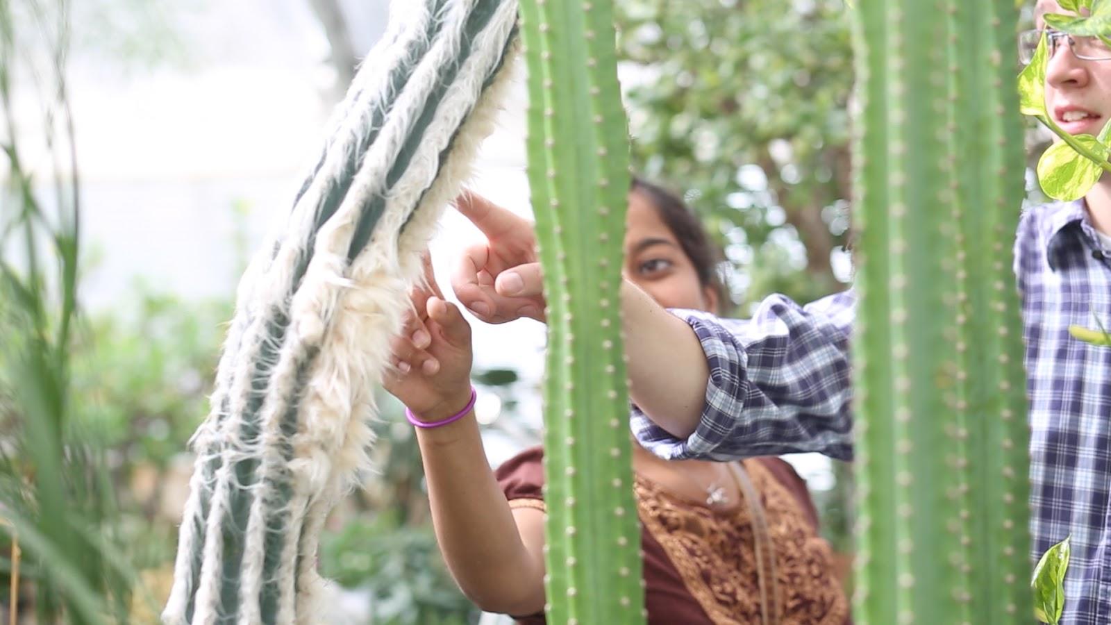 Manito Park Cactus