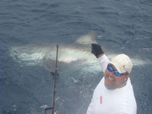 International fishing news usa a 1 000 lb white shark for Great white shark fishing
