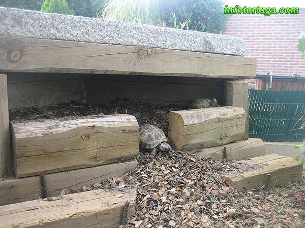Un zoo en casa instalaciones para tortugas terrestres for Piscina para tortugas