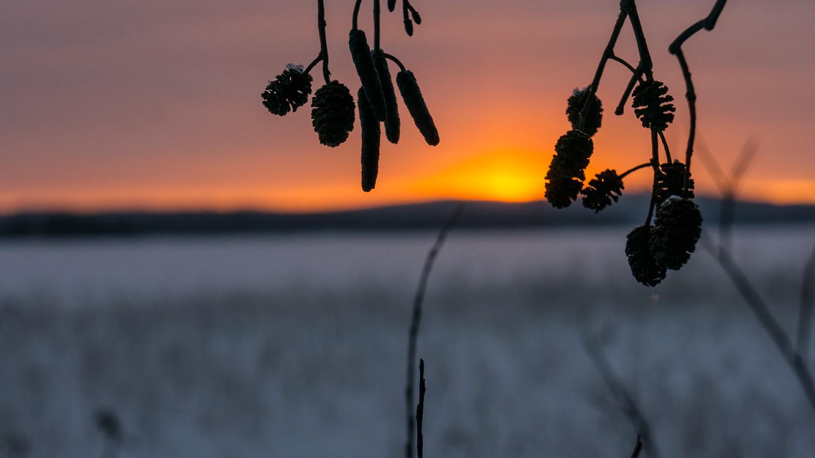 Kaijansaari-2014-01-18