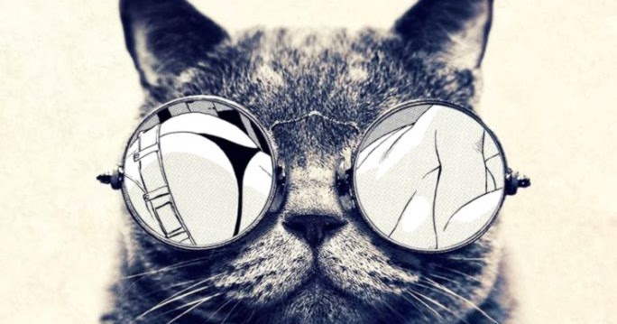cool cat wallpapers for your phone