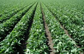 Valor da Produção Agrícola em Cristalina 2010