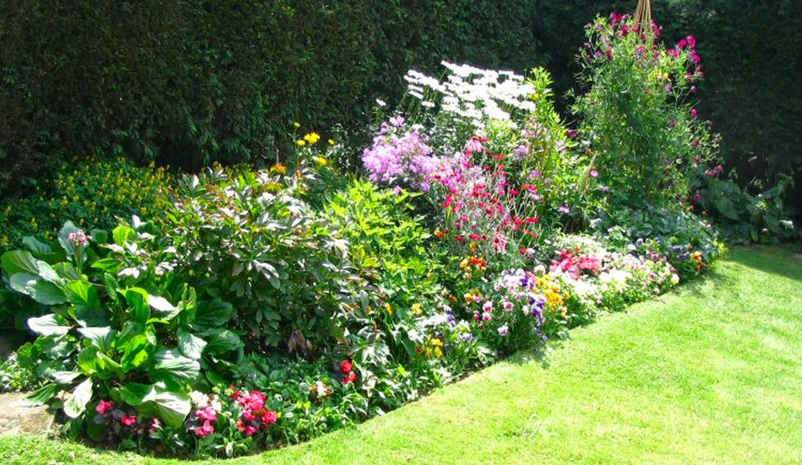 Landscape design for Easy to care for outdoor flowering plants