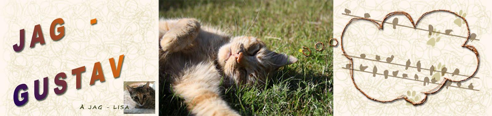 Katten Gustav