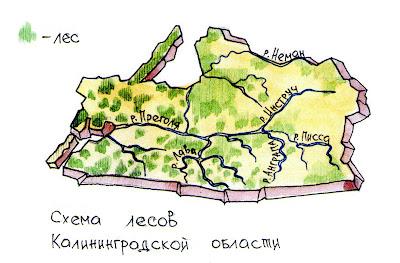 Схема лесов калининградской области