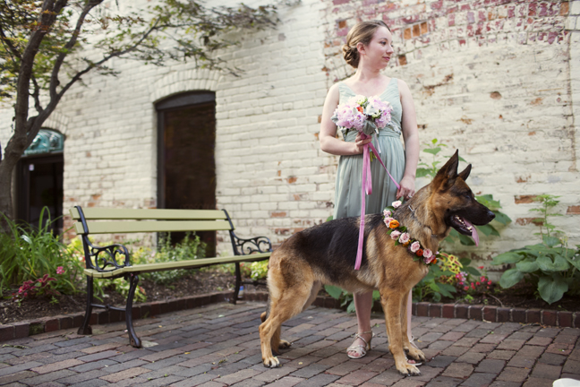 Fresh floral dog collar for zingerman's on fourth wedding in kerrytown courtyard with Evey and bridesmaids bouquet by sweet pea floral design ann arbor