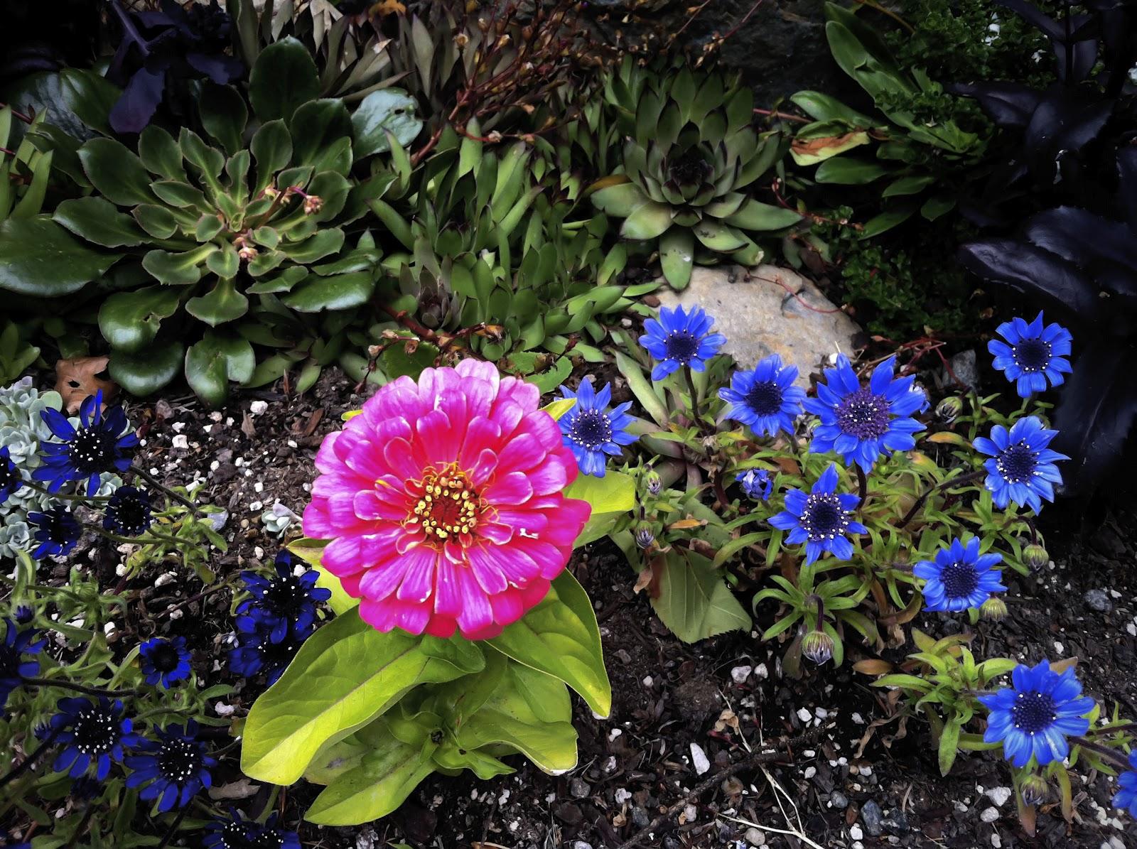 so many plants - Pretty Plants