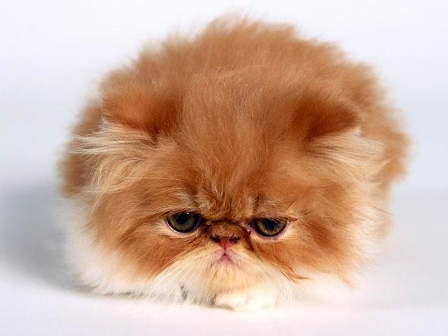 Cute Pussy Cat 14