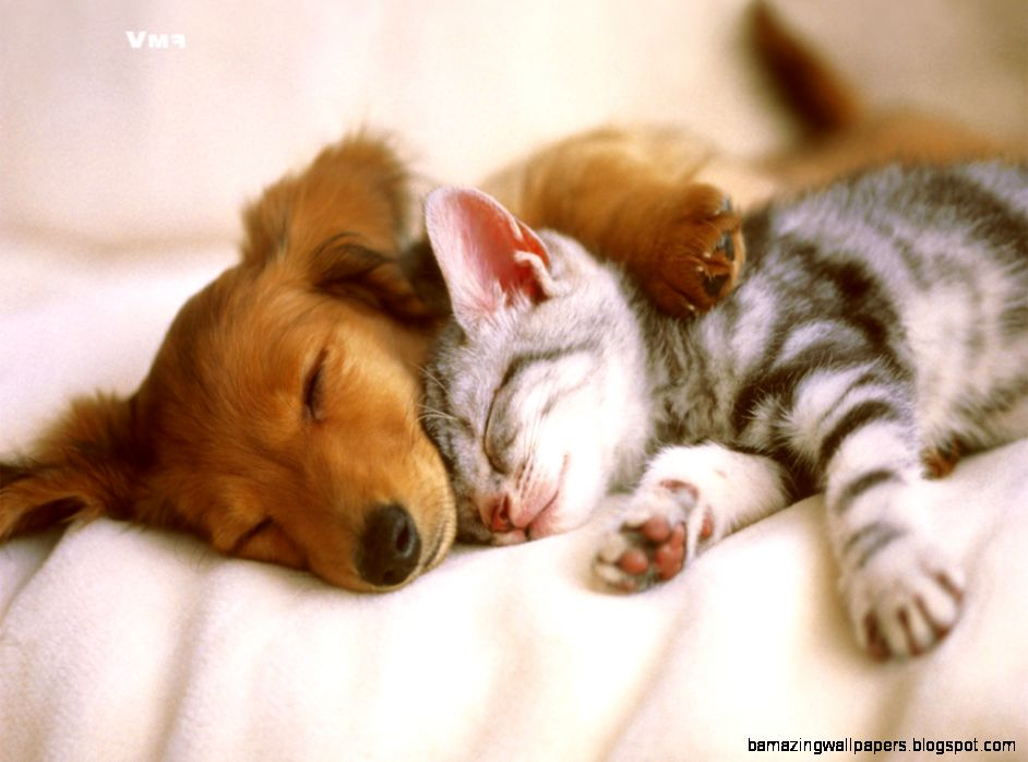 Cute Puppies and Cats 7 HD Images Wallpapers  HD Image Wallpaper