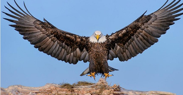 Ο Αετός σαν σύμβολο στην Αρχαία Ελλάδα