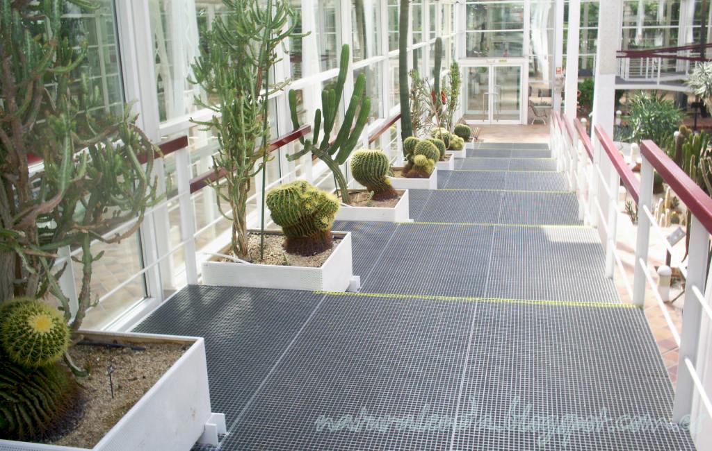 escaleras invernadero desertico