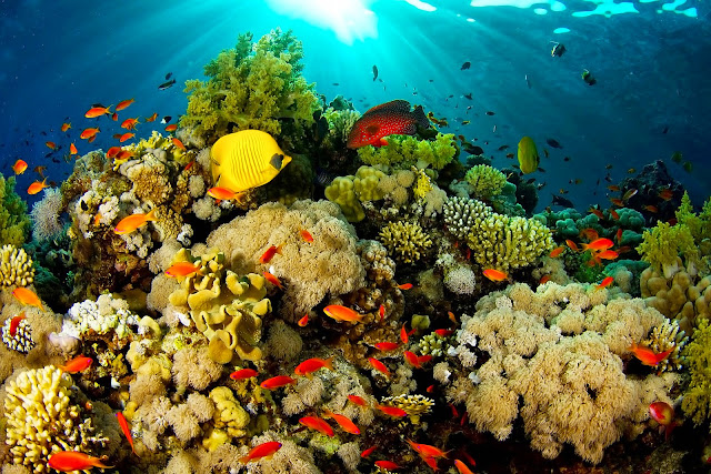 Raja Ampat Underwater Scenery