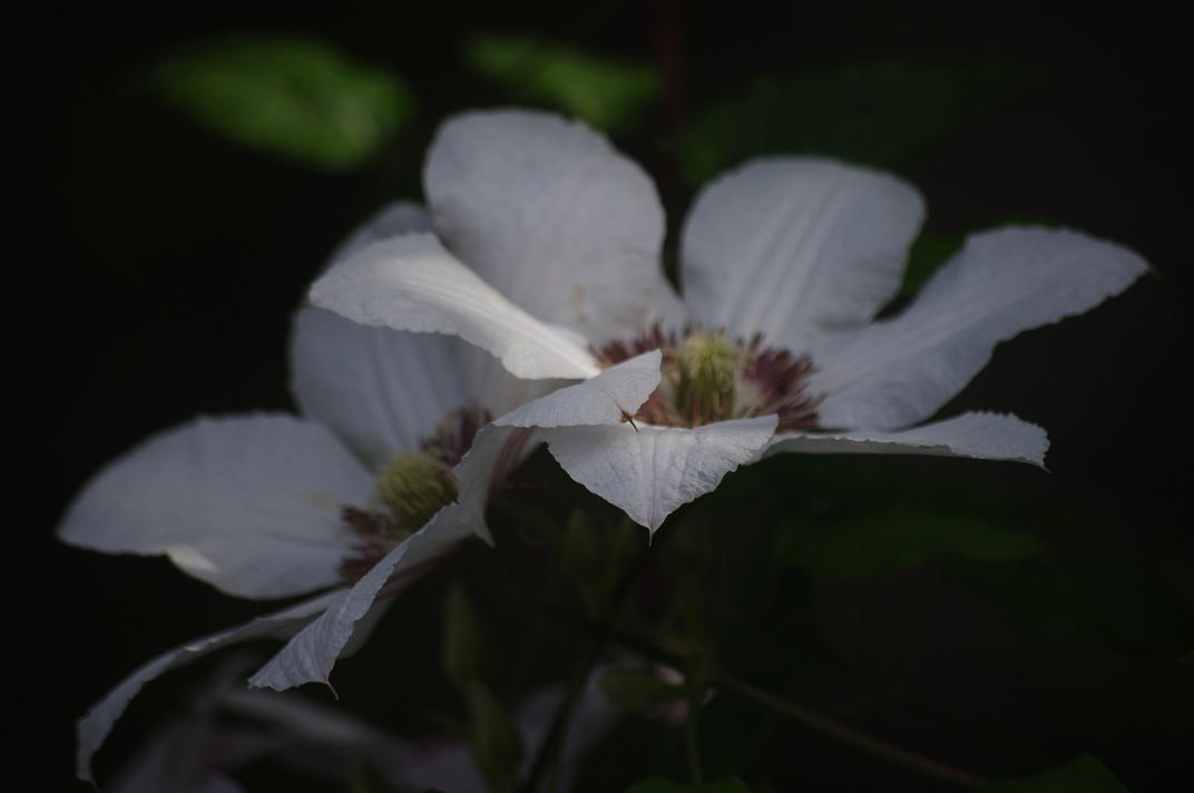 Le jardin des couronnes cl matite jean paul ii for Jardin entretien jean paul traineau