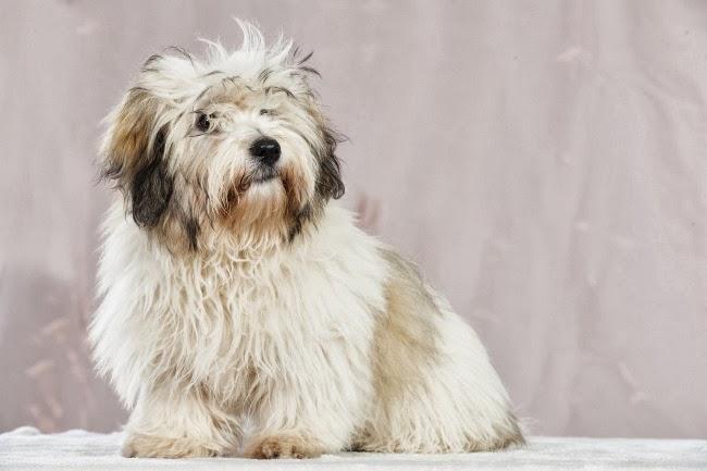 Antykoncepcja dla psów