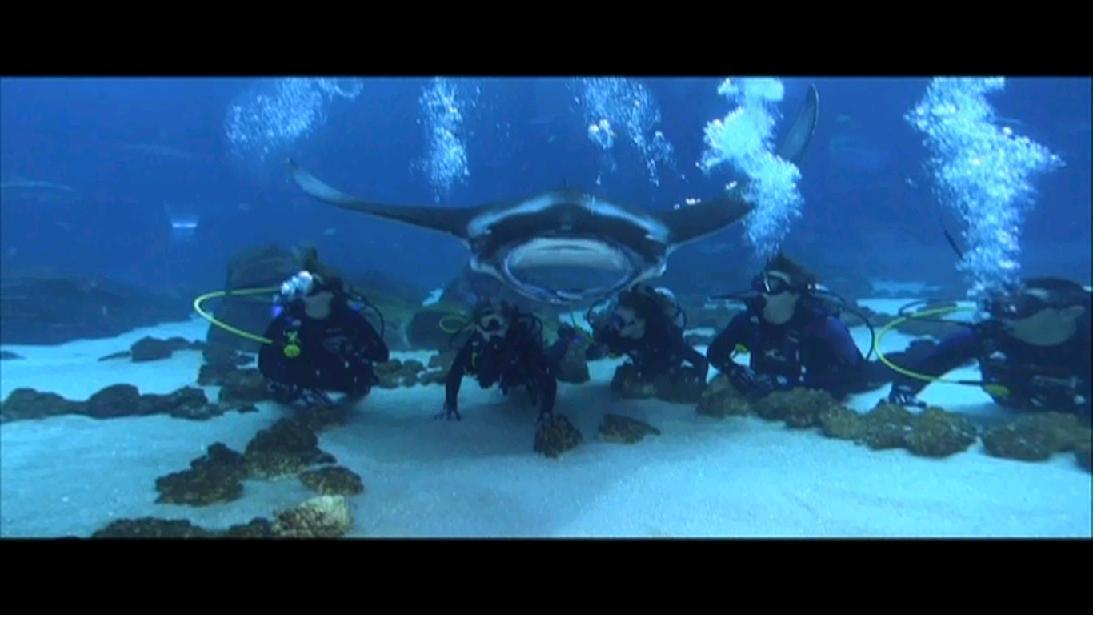 Georgia Aquarium Internship T 6 Weeks