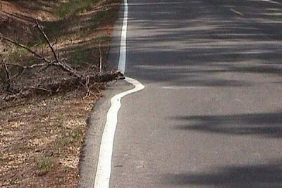 Faixa de sinalização de estrada de rodagem desvia de um toco caído no acostamento só para preservar a natureza.