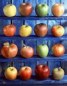 La manzana es tan suculenta que nadie puede resistirse a ella.