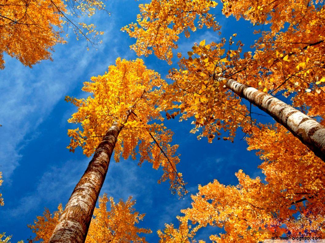Fall Trees HD desktop wallpaper  Widescreen  High Definition