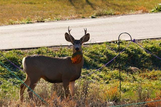 deer, feeding, outdoors, hunt, hunting