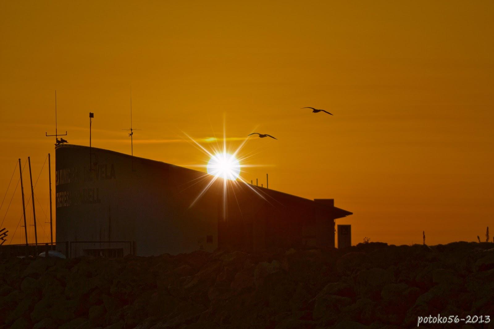 Gaviotas dando los buenos dias al Sol