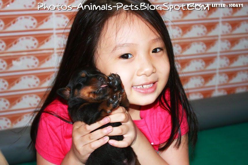 http://3.bp.blogspot.com/-sBwMI3zkCu0/TbgA-qZeAPI/AAAAAAAAA1g/w0XSCyRObrM/s1600/Cute%2BRottweiler_0003.jpg